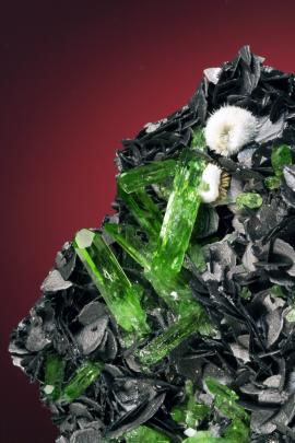 Diopside on graphite, Karo Mine, Merelani, Tanzania. A superb specimen of gem diopside crystals on some of the finest graphite crystals known. Sponsor: G. Arntsen. Field of view is approximately 4 cm wide. Photo by J. Jaszczak. (DM 30189)