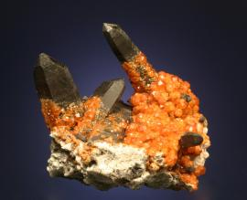 Spessartine, Quartz, Tongbei, Fujian, China. An outstanding specimen of orange spessartine crystals encrusting smoky quartz crystals. Specimen 12 cm tall. Photo by G. Robinson. (DM 27685)