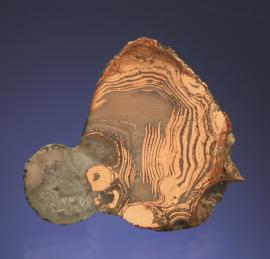 Copper in Agate, Wolverine #2 Mine, Houghton County, Michigan. Copper replaceing bands of an agate. Specimen 3.5 cm wide. Photo by G. Robinson. (DM 30339)