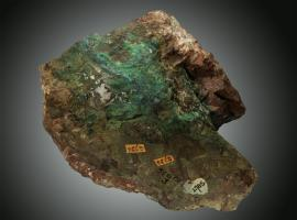 Chrysocolla, Copper Harbor, Keweenaw County, Michigan. This specimen comes from a vein that extends into Lake Superior from near the current location of the Copper Harbor lighthouse collected by Douglass Houghton. Donor: Douglass Houghton. Specimen 13 cm long. (UM489)