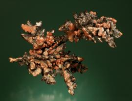 Copper, Keweenaw Peninsula, Michigan. Sharp crystal aggregates with black and red tenorite and cuprite coatings and an exceptionally high luster. Donor: L. L. Hubbard. Specimen 15 cm long. Photo by G. Robinson. (LLH 580)