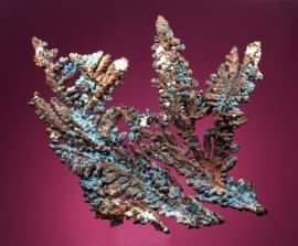 Copper, White Pine Mine, Ontonagon County, Michigan. Dendritic copper crystal group with some blue coatings. Donor: L. Hampel. 20 cm wide. Photo by G. Robinson. (DM 28299)