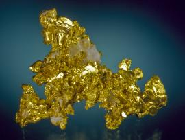Gold, Eagle's Nest Mine, Placer County, California. Fine crystals of gold with minor quartz. Specimen 5 cm wide. Photo by J. Jaszczak. (DM 25975)