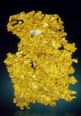 Gold, Eagle's Nest Mine, Placer County, California. A superb California gold specimen. Eagle's Nest has produced some of the finest crystallized gold specimens ever found. Specimen 8 cm tall. Photo by J. Jaszczak. (DM 25976)