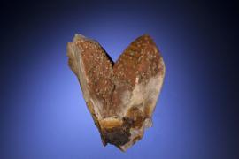 Scheelite, quartz, Zinnwald, Bohemia, Czech Republic. A historical European specimen. From the Baron Louis Lederer collection. Specimen 10.5 cm tall. Photo by C. Stefano. (UM 2814)
