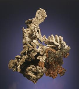 Silver, Cliff Mine, Keweenaw County, Michigan. One of the museum's finest silvers, this specimen is one of only a very few good silvers from the Cliff Mine known. Donor: L. L. Hubbard. Specimen 10 cm tall. Photo by G. Robinson. (LLH 508)