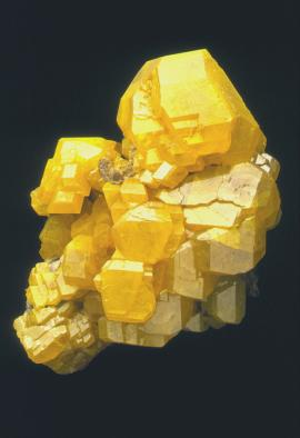 Sulfur, Cianciana, Sicily, Italy. An outstanding large specimen of sulfur crystals from the world's best locality for the species. Specimen 20 cm tall. Photo by J. Scovil. (DM 301)