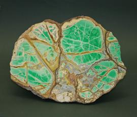 Variscite and crandallite, Clay Canyon, Fairfield, Utah. A cut and polished slab of a large variscite nodule. Collected in the 1940's by George Robbe, who leased the site from the famous Ed Over for a season. Donor: G. Robbe. Specimen 29 cm wide. Photo by G. Robinson. (GBR 1539)